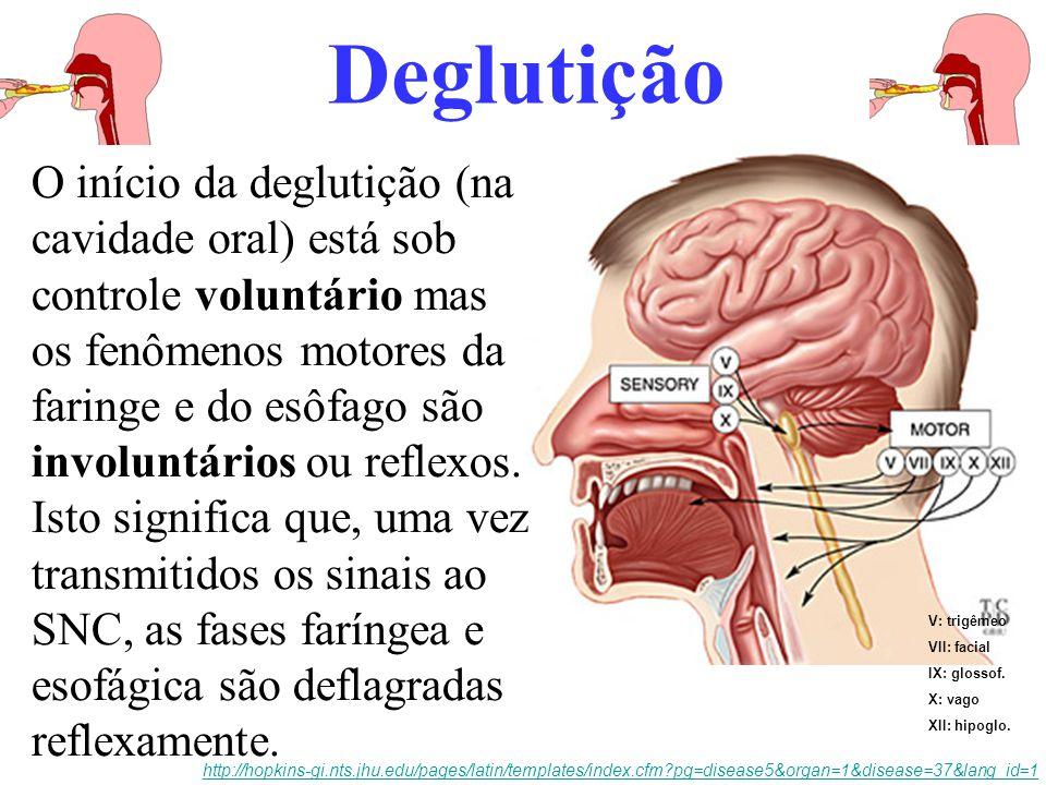 Deglutição transporte de substâncias, nutrientes e água da cavidade oral para o estômago limpeza da cavidade oral por remoção constante da saliva e de