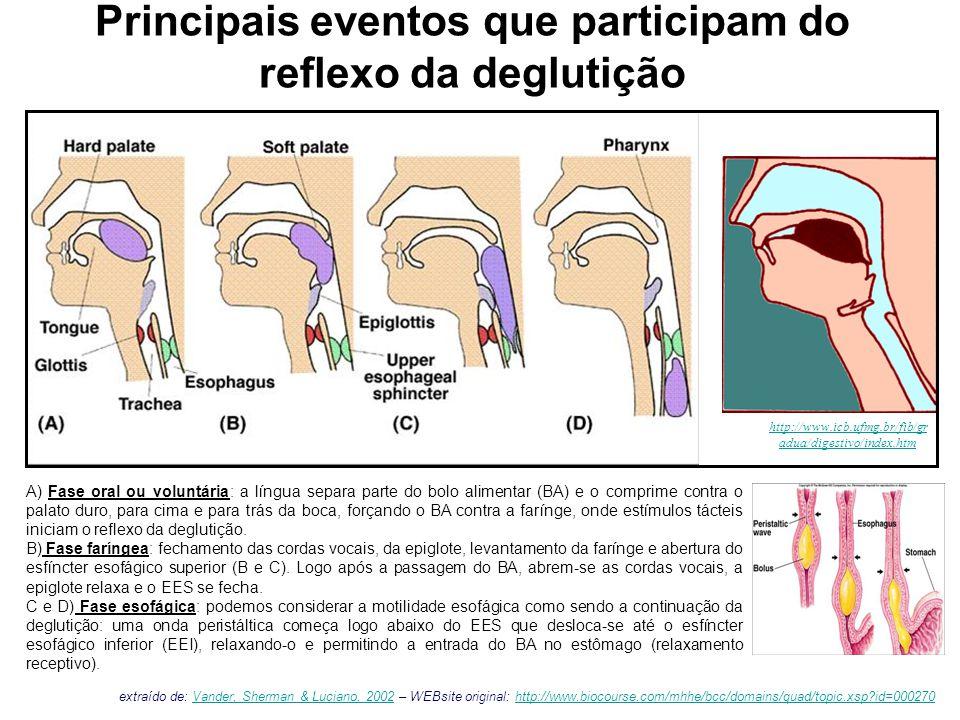 esfíncter esofágico superior (EES) esfíncter esofágico inferior (EEI) Motilidade esofágica esôfagodiafragma estômago traquéia A DEGLUTIÇÃO desencadeia