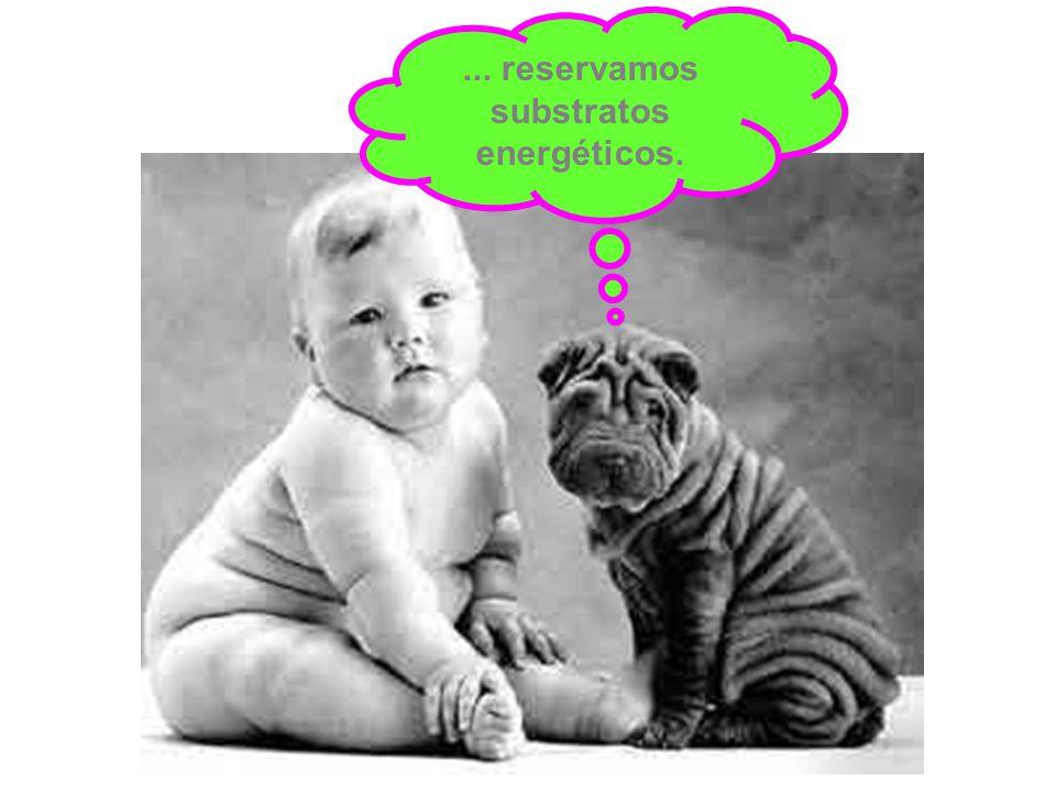 ... reservamos substratos energéticos.