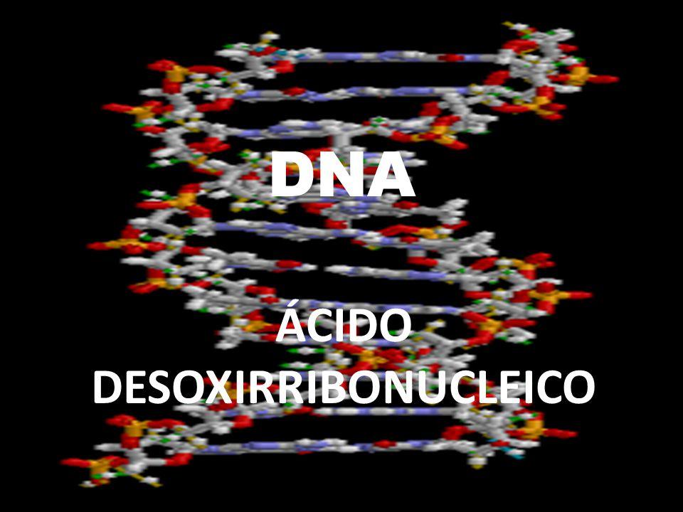 DNA ÁCIDO DESOXIRRIBONUCLEICO