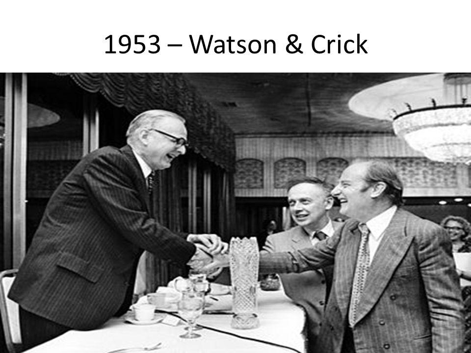 1953 – Watson & Crick
