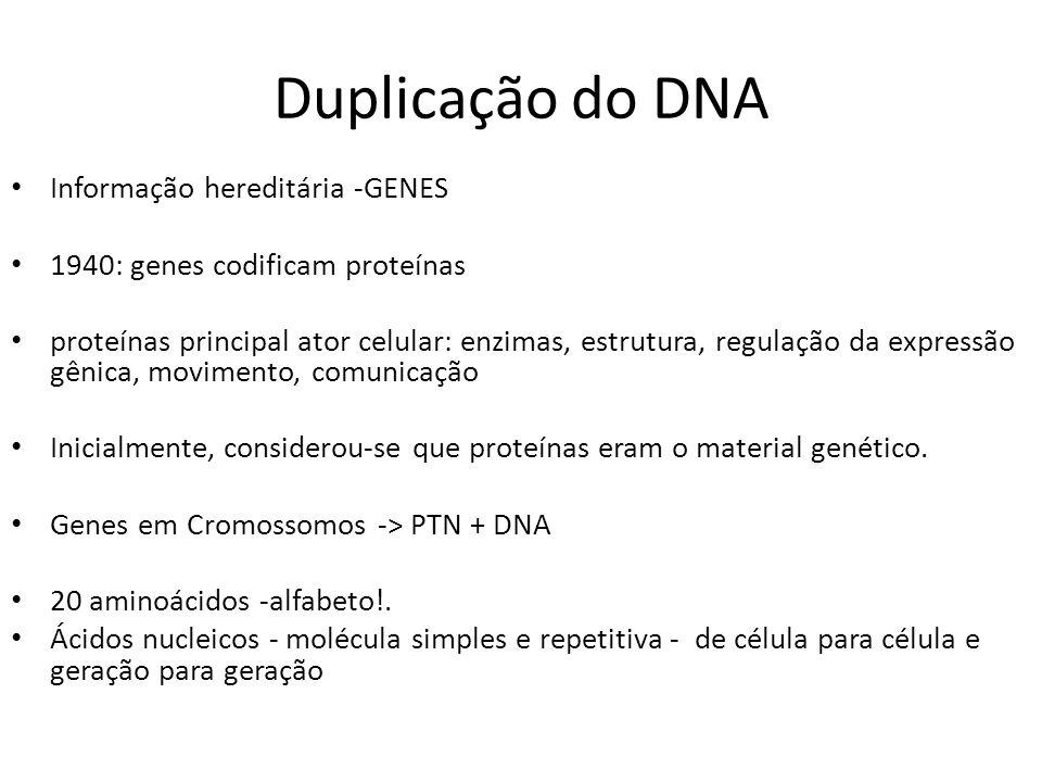 Duplicação do DNA Informação hereditária -GENES 1940: genes codificam proteínas proteínas principal ator celular: enzimas, estrutura, regulação da exp