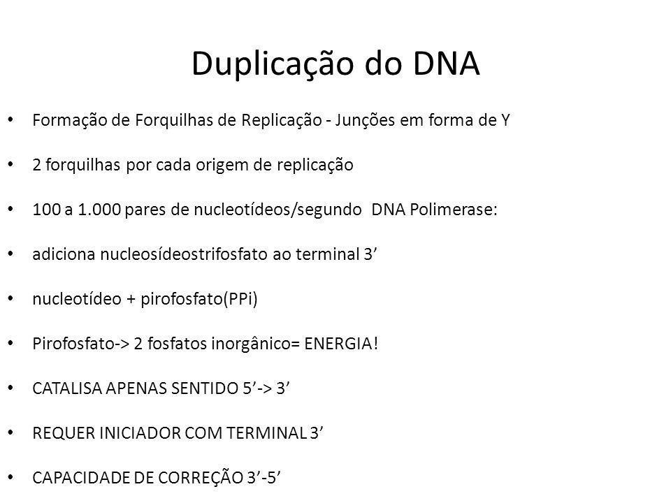 Duplicação do DNA Formação de Forquilhas de Replicação - Junções em forma de Y 2 forquilhas por cada origem de replicação 100 a 1.000 pares de nucleot