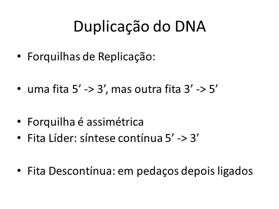 Forquilhas de Replicação: uma fita 5 -> 3, mas outra fita 3 -> 5 Forquilha é assimétrica Fita Líder: síntese contínua 5 -> 3 Fita Descontínua: em peda