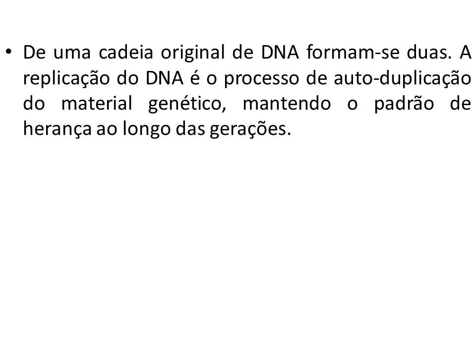 De uma cadeia original de DNA formam-se duas. A replicação do DNA é o processo de auto-duplicação do material genético, mantendo o padrão de herança a