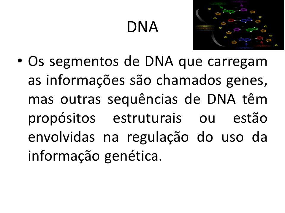 DNA Os segmentos de DNA que carregam as informações são chamados genes, mas outras sequências de DNA têm propósitos estruturais ou estão envolvidas na