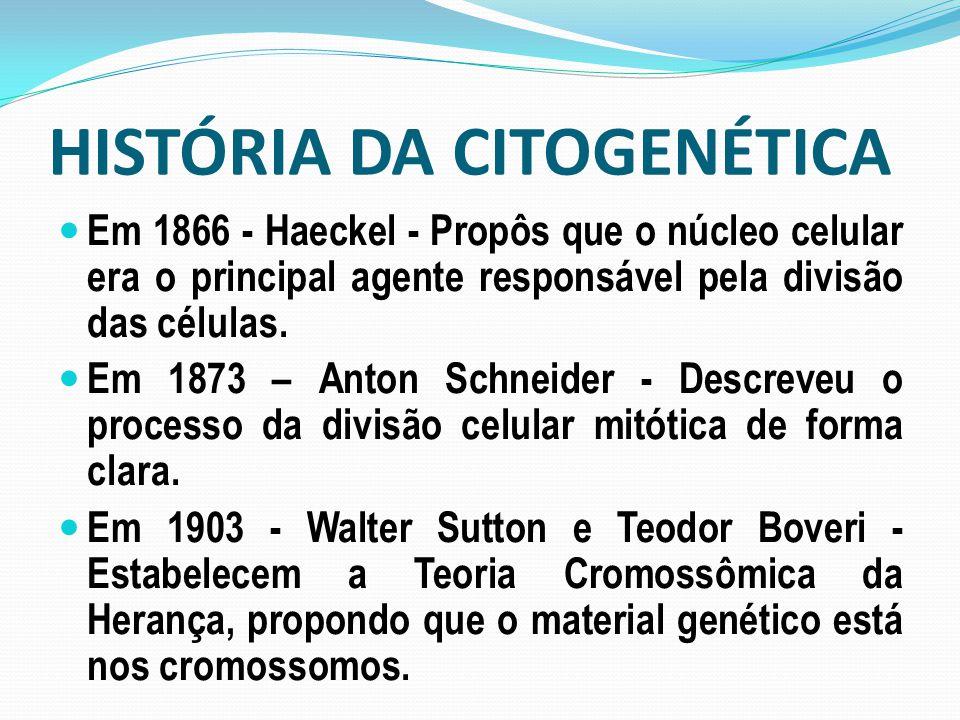 HISTÓRIA DA CITOGENÉTICA Em 1866 - Haeckel - Propôs que o núcleo celular era o principal agente responsável pela divisão das células. Em 1873 – Anton