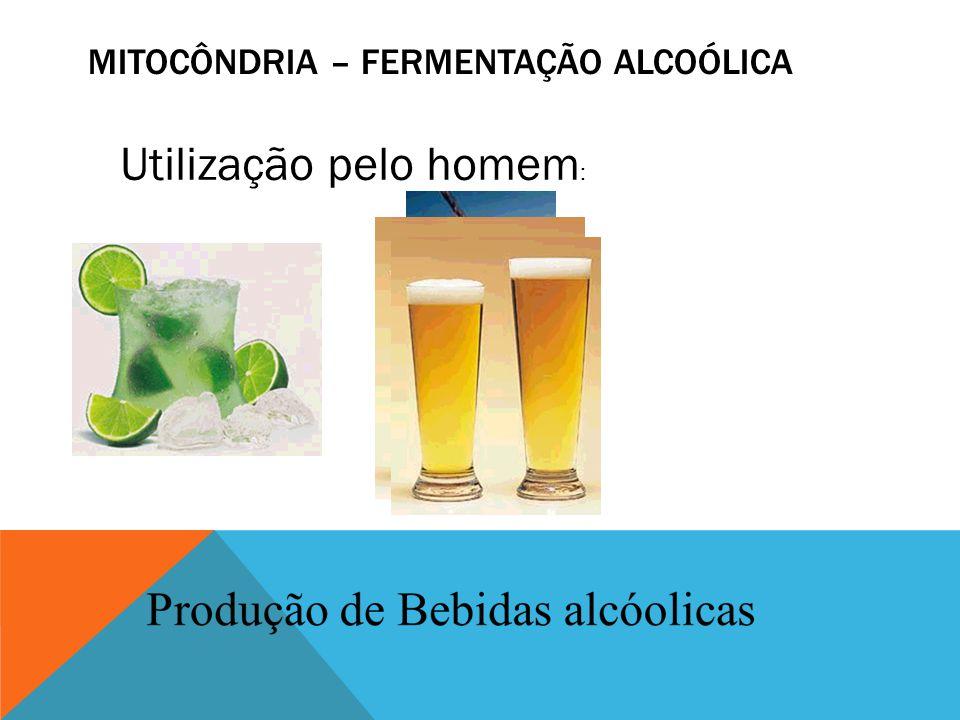 MITOCÔNDRIA – FERMENTAÇÃO ALCOÓLICA Utilização pelo homem :