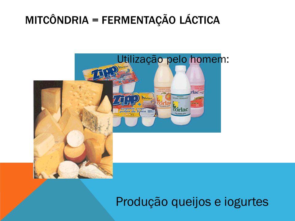 MITCÔNDRIA = FERMENTAÇÃO LÁCTICA Produção queijos e iogurtes Utilização pelo homem: