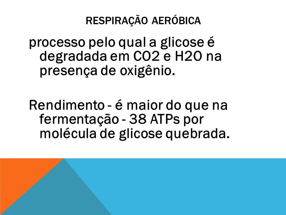 RESPIRAÇÃO AERÓBICA processo pelo qual a glicose é degradada em CO2 e H2O na presença de oxigênio. Rendimento - é maior do que na fermentação - 38 ATP