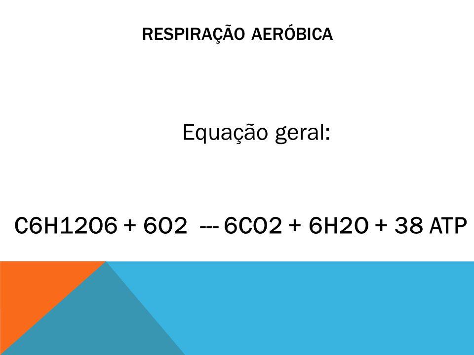 RESPIRAÇÃO AERÓBICA C6H12O6 + 6O2 --- 6CO2 + 6H2O + 38 ATP Equação geral: