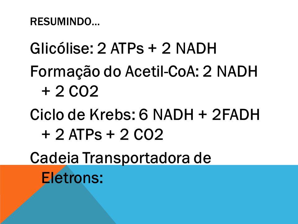 RESUMINDO... Glicólise: 2 ATPs + 2 NADH Formação do Acetil-CoA: 2 NADH + 2 CO2 Ciclo de Krebs: 6 NADH + 2FADH + 2 ATPs + 2 CO2 Cadeia Transportadora d