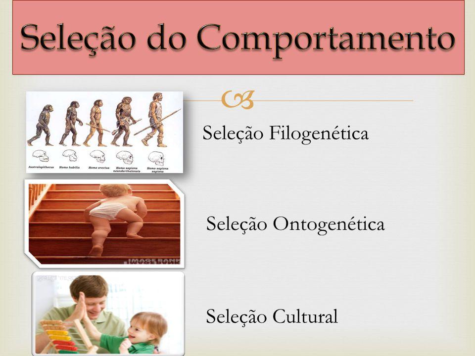 Seleção Filogenética Seleção Cultural Seleção Ontogenética