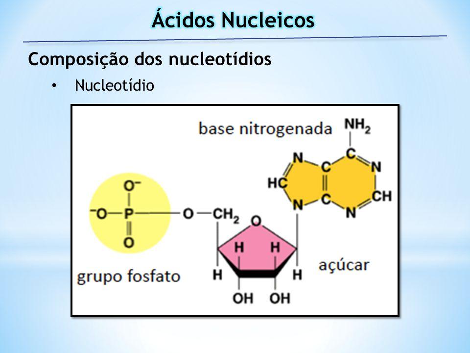 Composição dos nucleotídios Nucleotídio