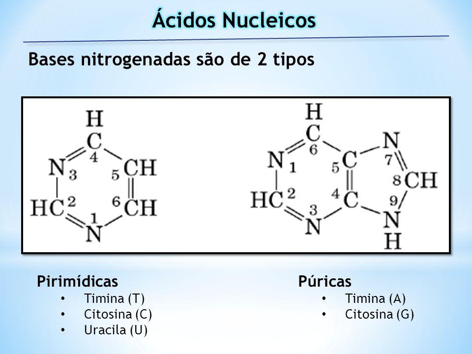 Bases nitrogenadas são de 2 tipos Pirimídicas Timina (T) Citosina (C) Uracila (U) Púricas Timina (A) Citosina (G)