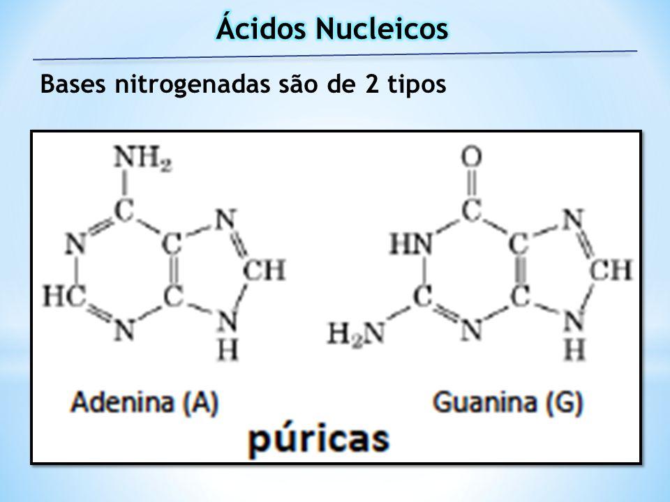 Bases nitrogenadas são de 2 tipos