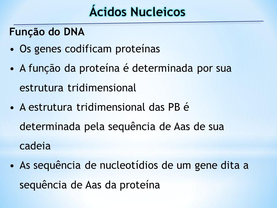 Função do DNA Os genes codificam proteínas A função da proteína é determinada por sua estrutura tridimensional A estrutura tridimensional das PB é det