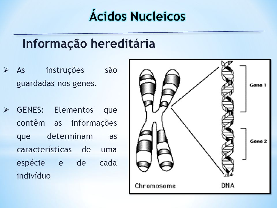 Estrutura do DNA