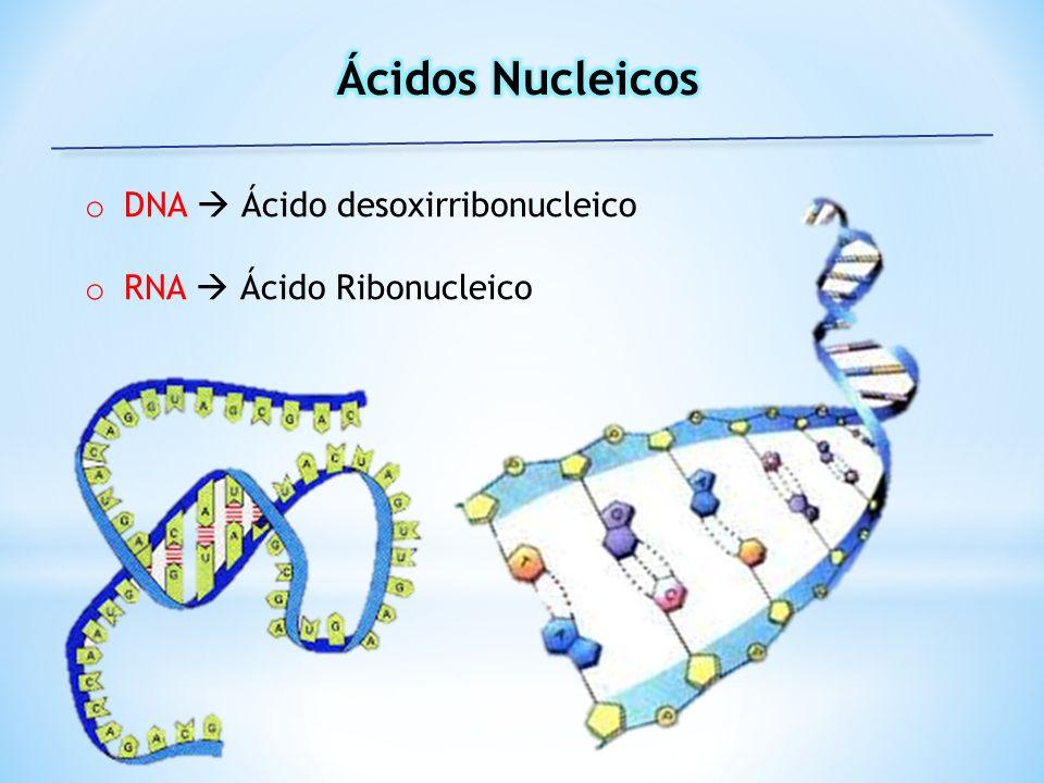 o DNA Ácido desoxirribonucleico o RNA Ácido Ribonucleico