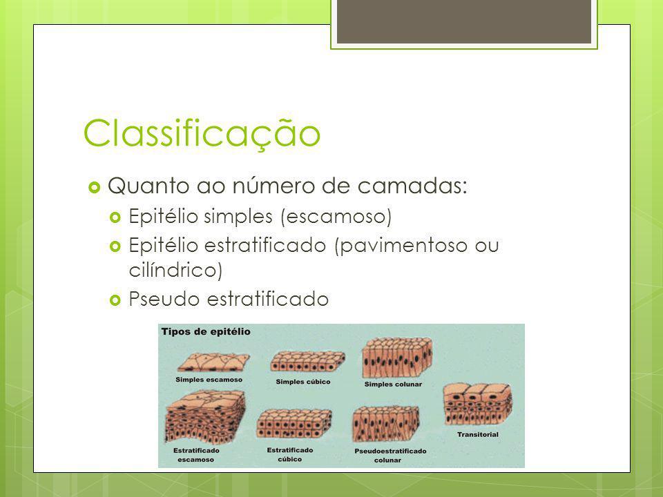 Classificação Quanto à forma das células: Epitélio pavimentoso Epitélio cúbico Epitélio cilíndrico