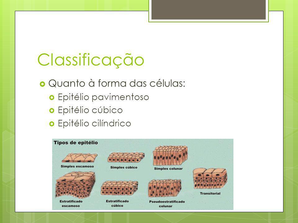 Fibras reticulares Anastomosadas umas às outras Arcabouço interno das glândulas Curtas finas e inelásticas Reticulína