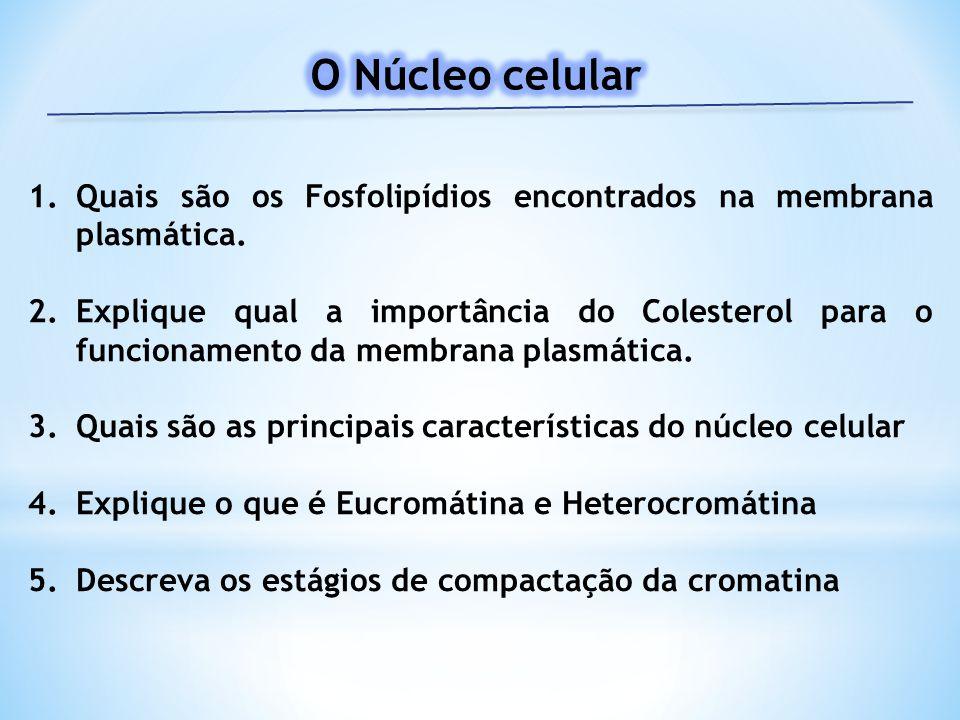 1.Quais são os Fosfolipídios encontrados na membrana plasmática. 2.Explique qual a importância do Colesterol para o funcionamento da membrana plasmáti