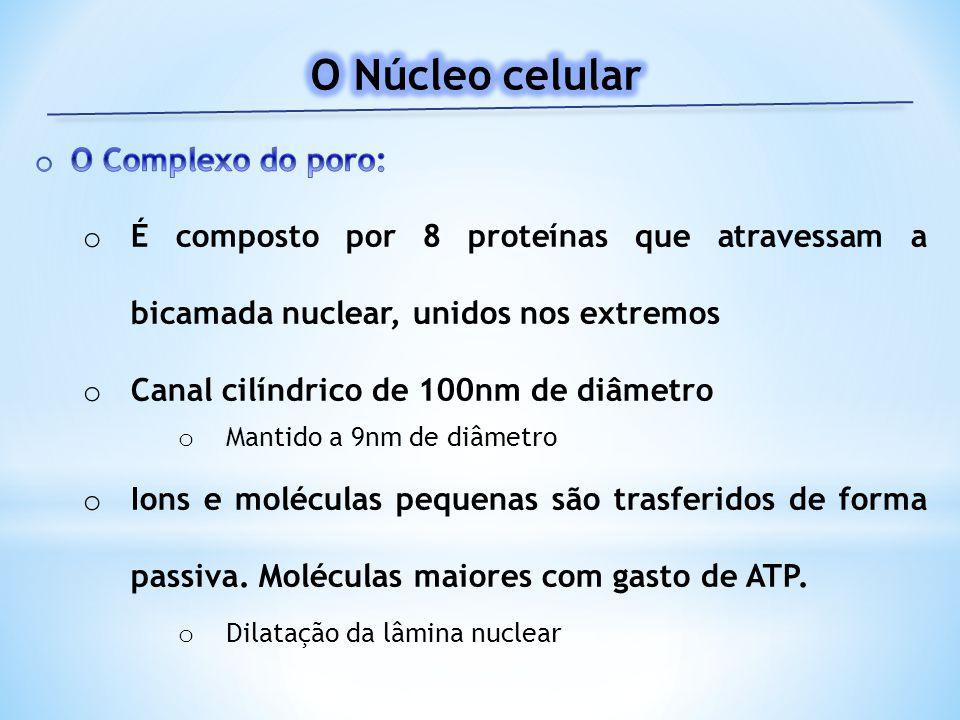 * Formado por 146 bp * Ligado a outro nucleossomo por uma região ligadora (linker), contendo entre 10 e 80 bp
