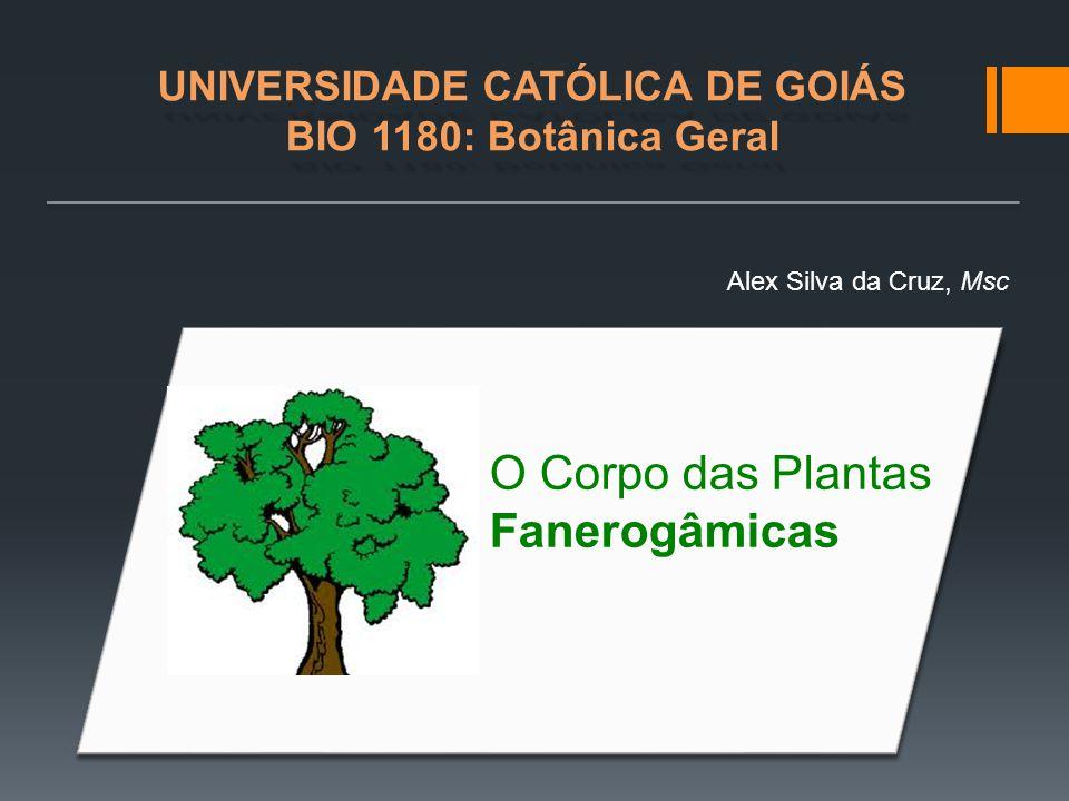 UNIVERSIDADE CATÓLICA DE GOIÁS BIO 1180: Botânica Geral Alex Silva da Cruz, Msc O Corpo das Plantas Fanerogâmicas