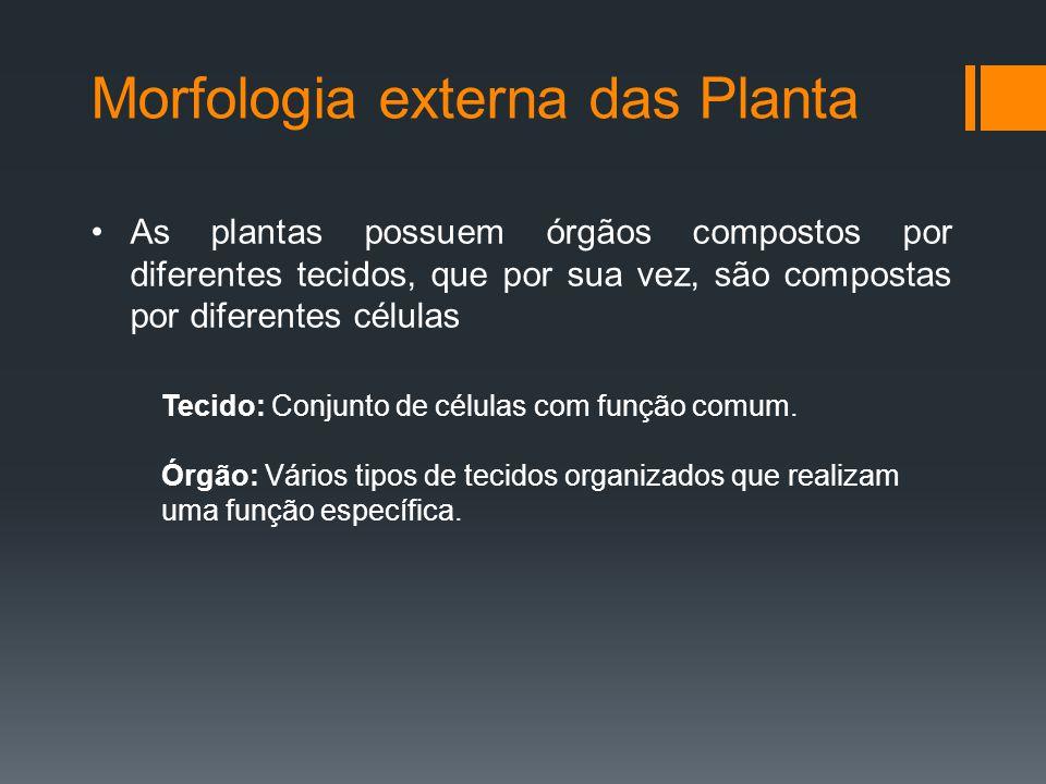 Morfologia externa das Planta As plantas possuem órgãos compostos por diferentes tecidos, que por sua vez, são compostas por diferentes células Tecido: Conjunto de células com função comum.