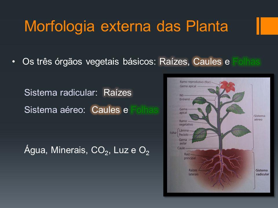 Morfologia externa das Planta Água, Minerais, CO 2, Luz e O 2