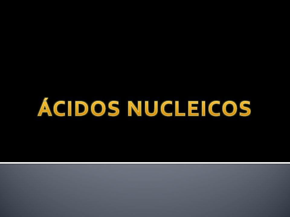 É o mais abundante na célula (>80%) Síntese nuclear combinado com proteínas - ribossomo procarioto 70S -(23S + 5S) (16S) eucarioto 80S -(28S+5.8S+5S) (18S)