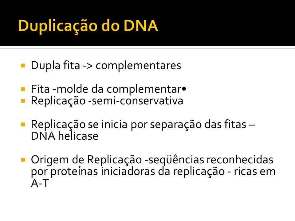 Dupla fita -> complementares Fita -molde da complementar Replicação -semi-conservativa Replicação se inicia por separação das fitas – DNA helicase Ori