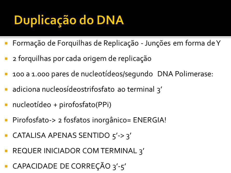 Formação de Forquilhas de Replicação - Junções em forma de Y 2 forquilhas por cada origem de replicação 100 a 1.000 pares de nucleotídeos/segundo DNA