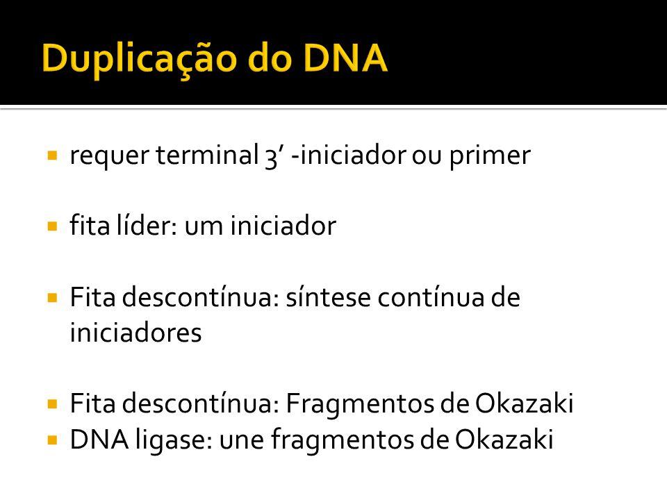 requer terminal 3 -iniciador ou primer fita líder: um iniciador Fita descontínua: síntese contínua de iniciadores Fita descontínua: Fragmentos de Okaz