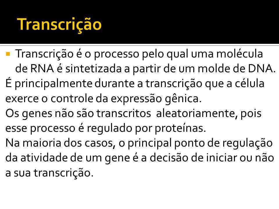 Transcrição é o processo pelo qual uma molécula de RNA é sintetizada a partir de um molde de DNA. É principalmente durante a transcrição que a célula
