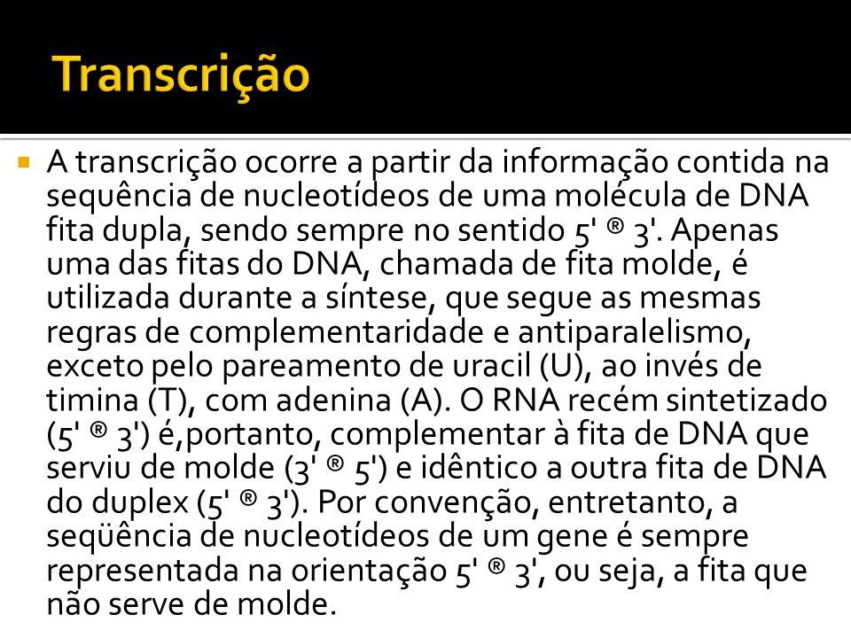 A transcrição ocorre a partir da informação contida na sequência de nucleotídeos de uma molécula de DNA fita dupla, sendo sempre no sentido 5' ® 3'. A
