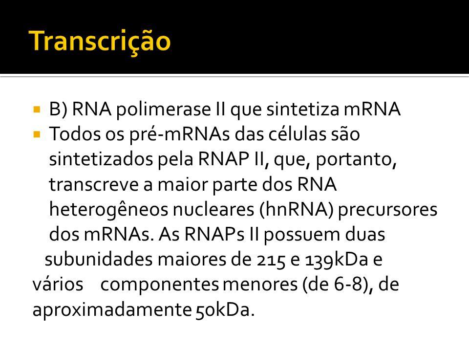 B) RNA polimerase II que sintetiza mRNA Todos os pré-mRNAs das células são sintetizados pela RNAP II, que, portanto, transcreve a maior parte dos RNA
