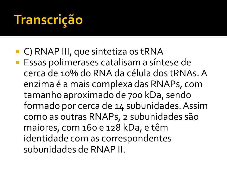 C) RNAP III, que sintetiza os tRNA Essas polimerases catalisam a síntese de cerca de 10% do RNA da célula dos tRNAs. A enzima é a mais complexa das RN