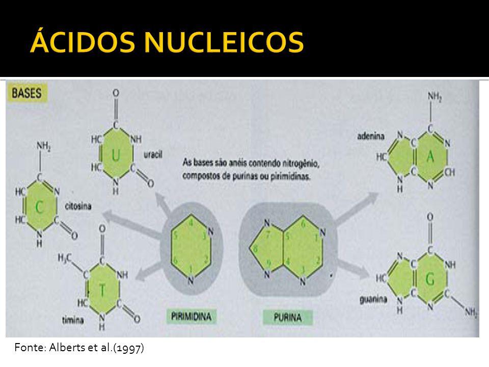 DNA: armazenamento e transmissão de genes Cromossomos (núcleo), mitocôndria e cloroplastos Duas cadeias em hélice em direções opostas -anti- paralelas = ambas em sentido 5 -> 3 Fita dupla - Bases complementares ligadas por pontes de hidrogênio A-T (2) e G-C (3) Bases hidrofóbicas -internas Grupos fosfatos e pentose hidrofílicos -externos