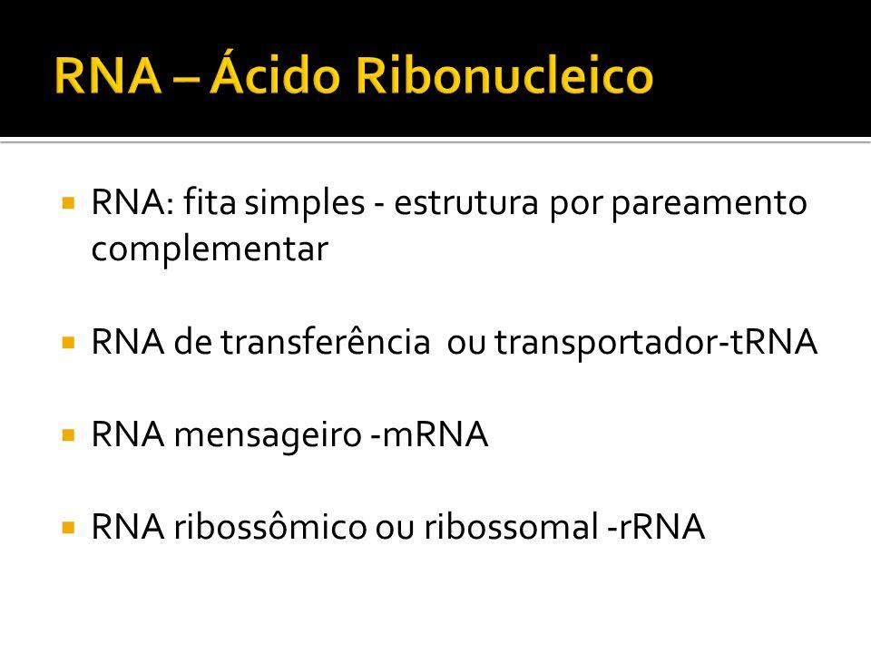 RNA: fita simples - estrutura por pareamento complementar RNA de transferência ou transportador-tRNA RNA mensageiro -mRNA RNA ribossômico ou ribossoma