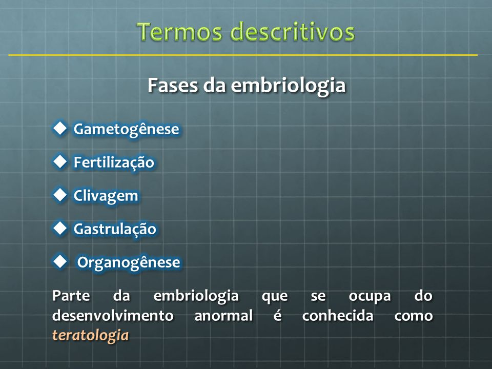 Fases da embriologia