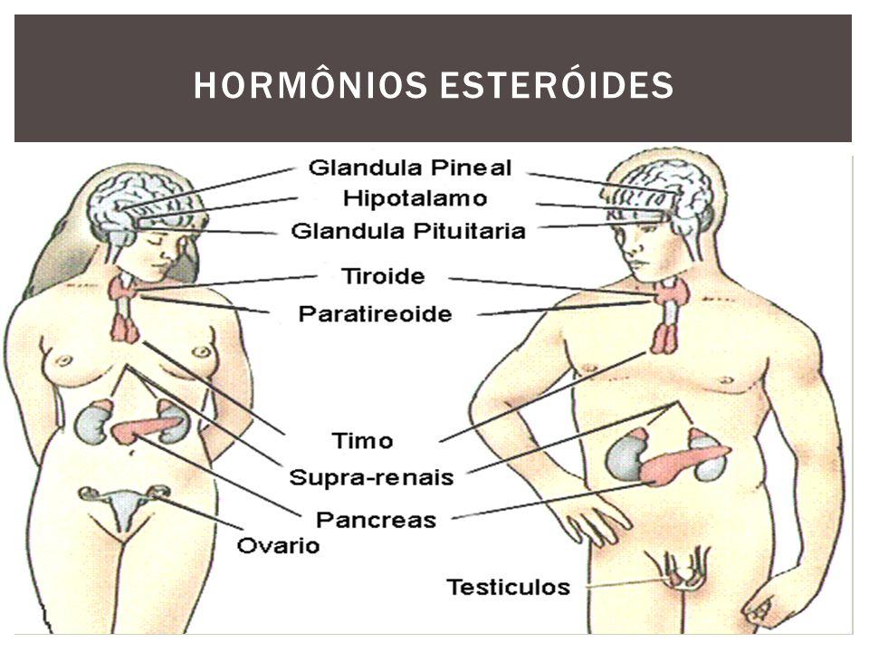 Hormônios do Córtex Adrenal - Glicocorticóides (zona fasciculada/retículada) - Mineralocorticóides (zona glomerulosa) Hormônios das Gônadas -Hormônios sexuais masculinos -Hormônios sexuais femininos HORMÔNIOS ESTERÓIDES