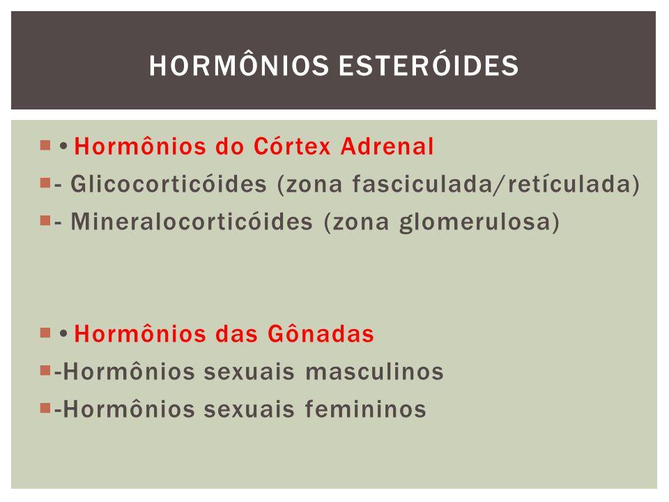 Hormônios do Córtex Adrenal - Glicocorticóides (21 Carbonos) Cortisol (zona fasciculada) Induz a gliconeogênese Corticosterona (abundante em roedores) (zona fasciculada/glomerulosa) HORMÔNIOS ESTERÓIDES