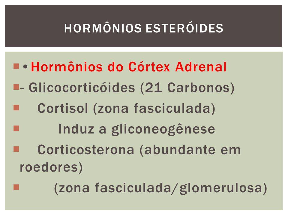 Hormônios do Córtex Adrenal - Mineralocorticóides (21 Carbonos) Aldosterona (zona glomerulosa) retenção de Na+ excreção de K+, H+ HORMÔNIOS ESTERÓIDES