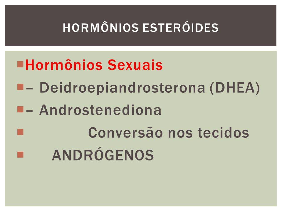 Hormônios Sexuais – Deidroepiandrosterona (DHEA) – Androstenediona Conversão nos tecidos ANDRÓGENOS HORMÔNIOS ESTERÓIDES