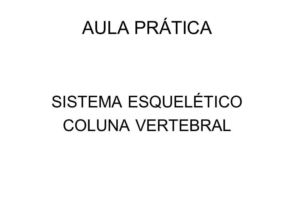 AULA PRÁTICA SISTEMA ESQUELÉTICO COLUNA VERTEBRAL