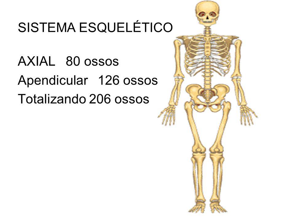SISTEMA ESQUELÉTICO AXIAL 80 ossos Apendicular 126 ossos Totalizando 206 ossos