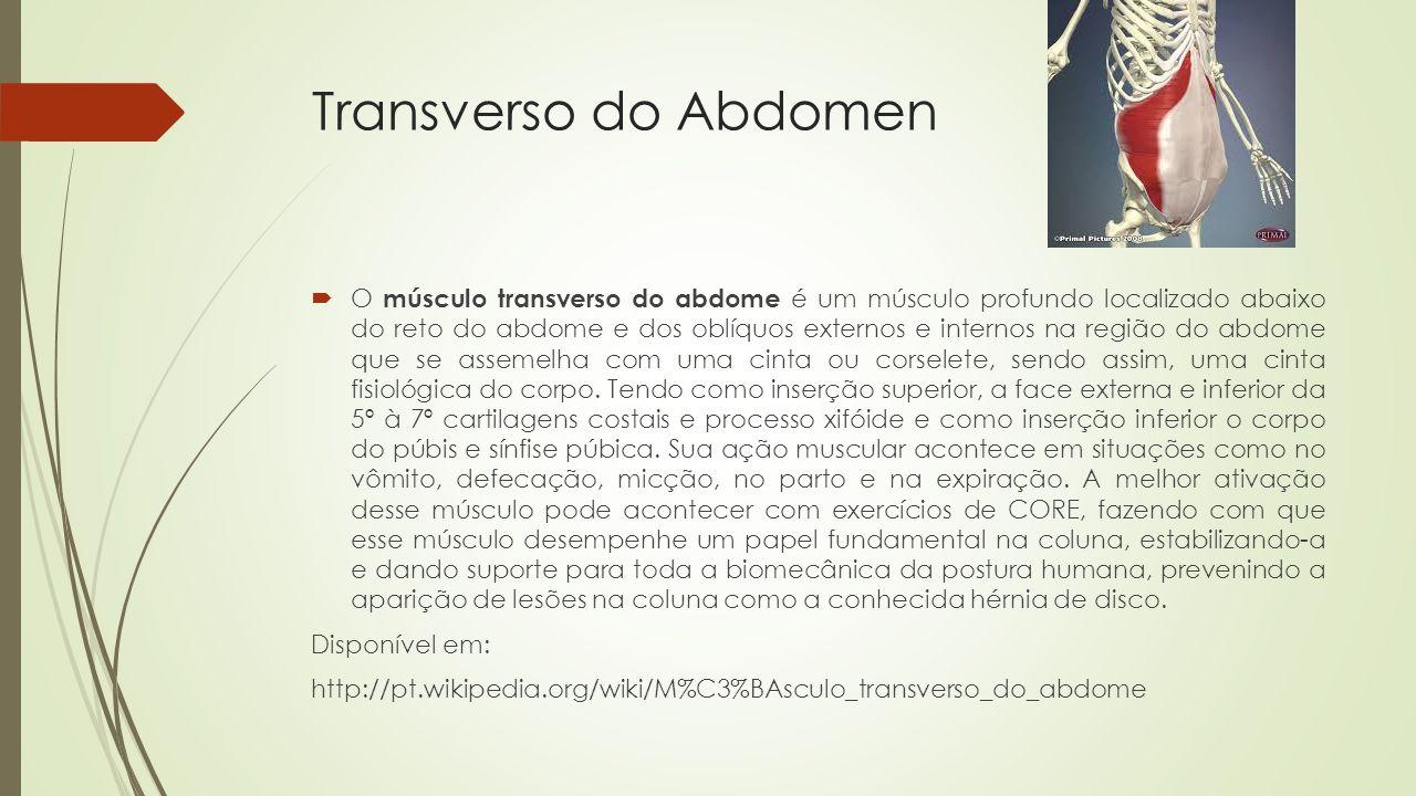 Transverso do Abdomen O músculo transverso do abdome é um músculo profundo localizado abaixo do reto do abdome e dos oblíquos externos e internos na região do abdome que se assemelha com uma cinta ou corselete, sendo assim, uma cinta fisiológica do corpo.