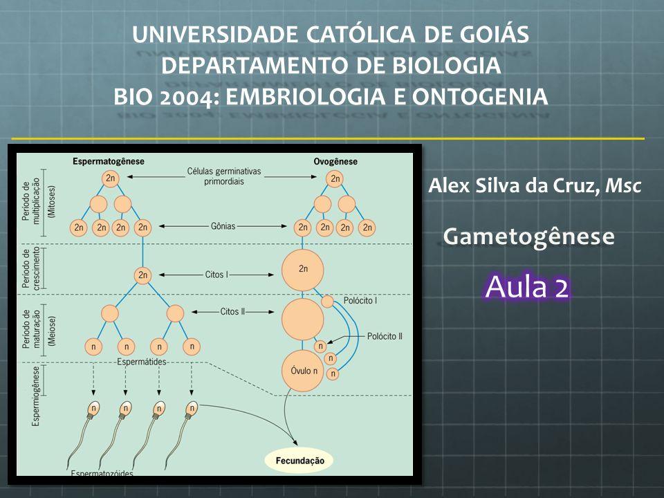 UNIVERSIDADE CATÓLICA DE GOIÁS DEPARTAMENTO DE BIOLOGIA BIO 2004: EMBRIOLOGIA E ONTOGENIA Alex Silva da Cruz, Msc
