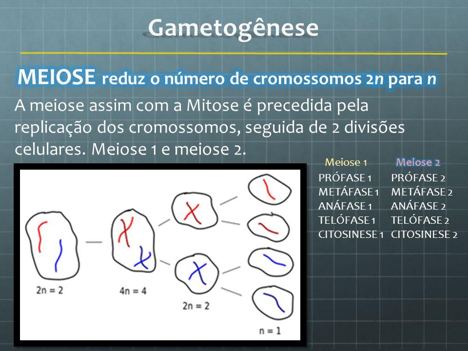 A meiose assim com a Mitose é precedida pela replicação dos cromossomos, seguida de 2 divisões celulares. Meiose 1 e meiose 2. PRÓFASE 1 METÁFASE 1 AN